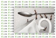 Октуда дома муравьи и стоит ли их бояться