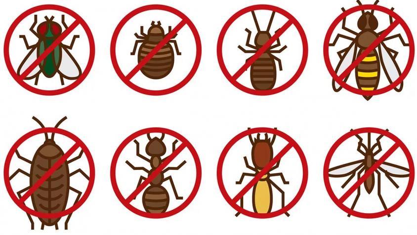 Дуст от насекомых - какие дусты лучше?