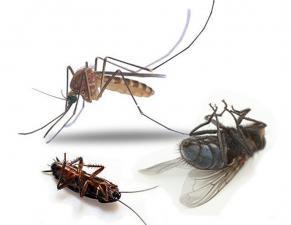 БУХач, колотушка насекомых